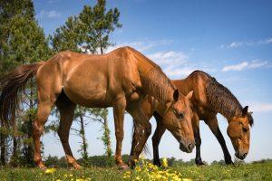 horse photographers hampton roads