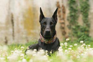 dog photography and portraiture hampton roads