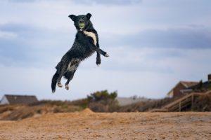 high flying pet photographer hampton va