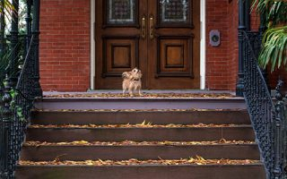 Small terrier dog with big dreams in Norfolk VA