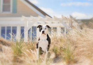 Summer, a 3-legged dog, sits outside her beach-side home in Norfolk, VA