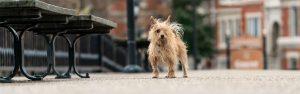 Small terrier on a bridge in Norfolk VA