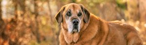 Senior dog in Gloucester Virginia