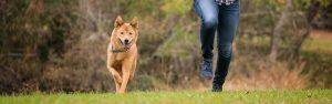 Chesapeake VA dog runs with her person