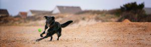 Norfolk VA beach dog photo
