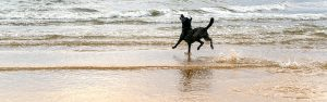 Dog bounding into the waves in Virginia Beach