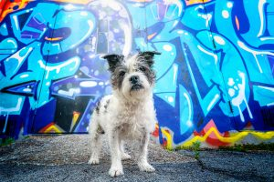 Small terrier dog poses in NEON Norfolk