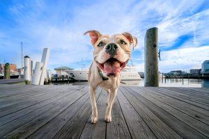 Dockside dog in Portsmouth Virginia