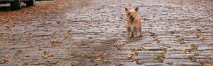 Freemason in Norfolk with terrier dog