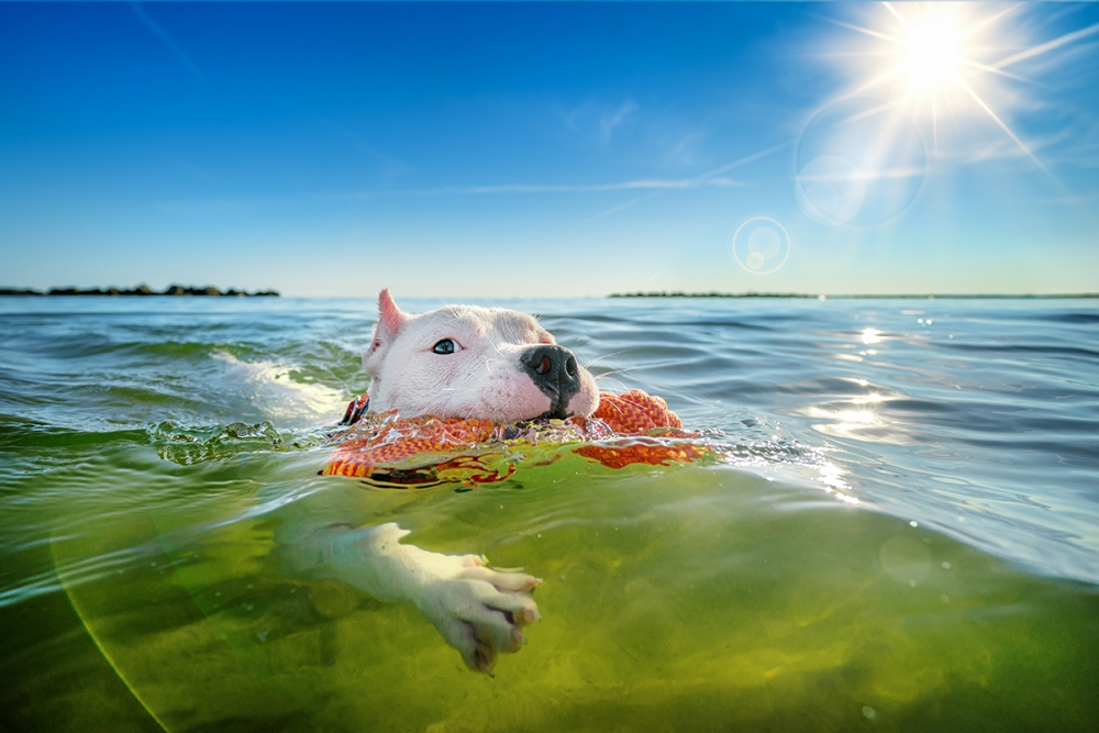 Three-legged dog swims in the Chesapeake Bay