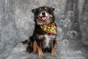 Bubble photos!