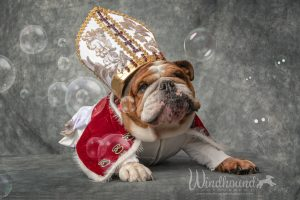 "English Bulldog, also known as ""Pope Leo"""