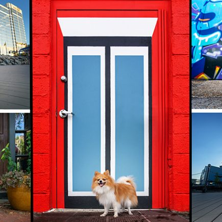 A collage of urban dog portraits