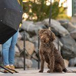 A dog poses with studio lighting