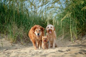 Mingo, Pebbles and Parker enjoy a morning pet photo session on the beach.