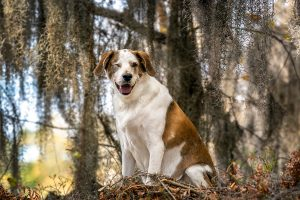 A mixed breed dog amid Spanish moss in Virginia Beach