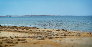 Birds fly along the shore at Grandview Beach in Hampton