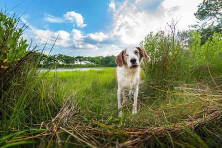 A dog alongside the Lynnhaven River